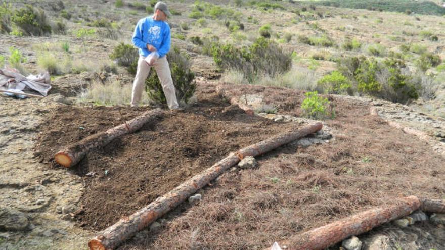 El Cabildo usa la ingeniería biológica para recuperar la reserva de El Brezal