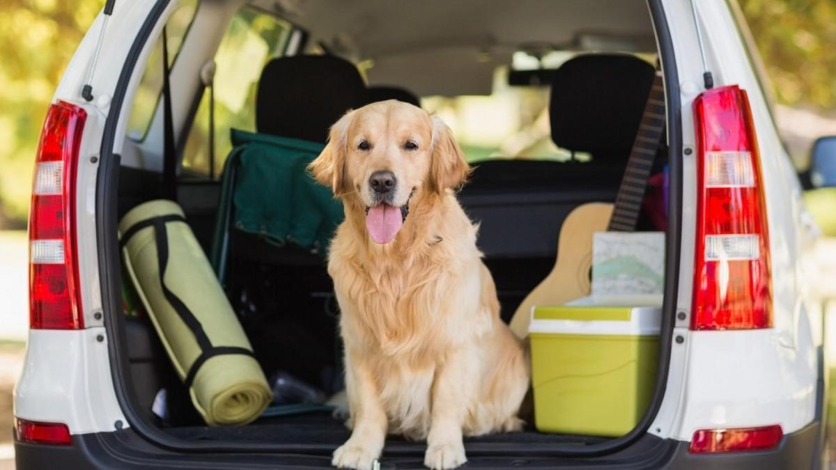Los mejores accesorios para llevar al perro en el coche