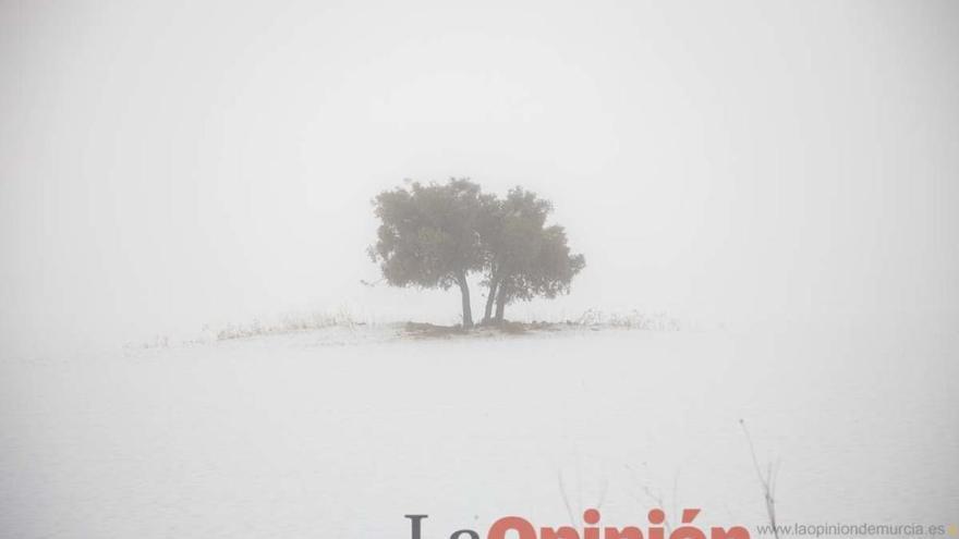 Nieve en la comarca del Noroeste (Pedanía de Los Royos y Cavila)