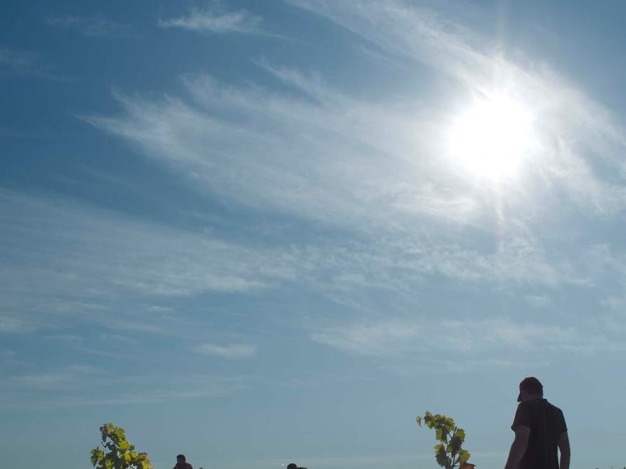 Labores de vendimia en un viñedo de la Denominación de Origen Toro. | Foto cedida a L. O. Z.