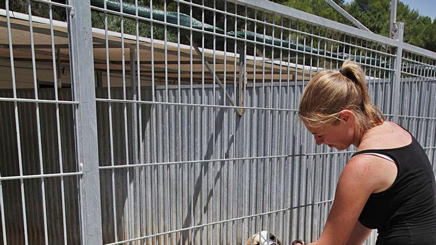 Los dos albergues de animales estarán en 2023    y contarán con ayuda del Consell