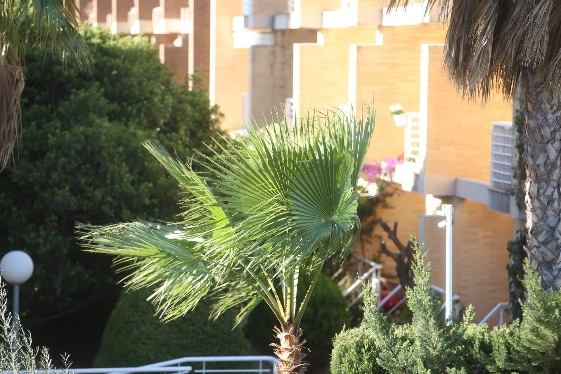 El tiempo en Alicante: alerta por vientos con rachas de hasta 70 km/hora
