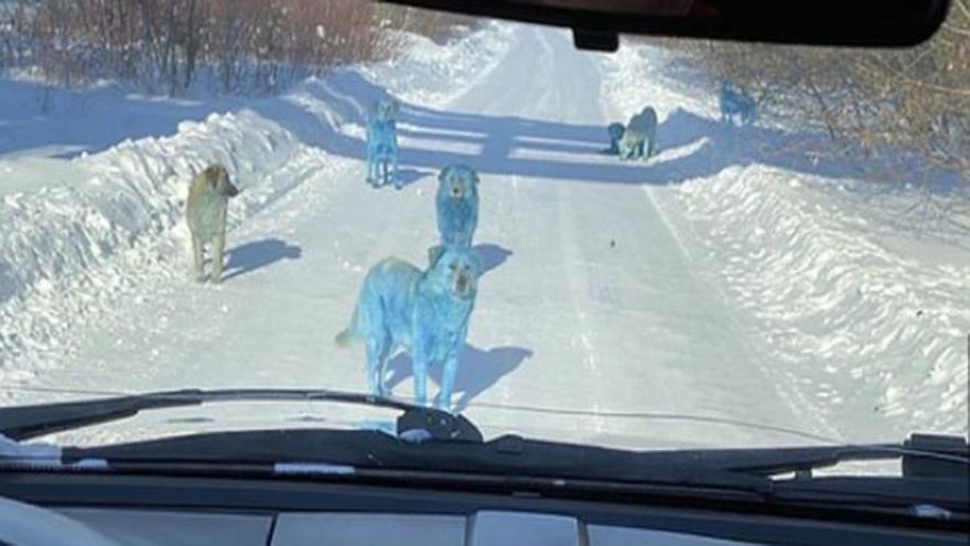 Aparecen perros azules cerca de una fábrica abandonada rusa