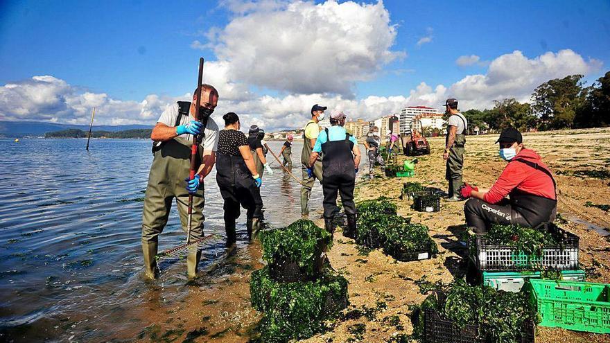Las mariscadoras de Carril celebran asamblea para el cambio del plan explotación