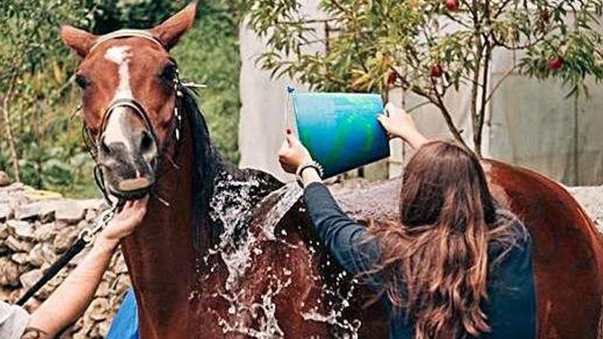 Los caballos vuelven a La Franca con récord