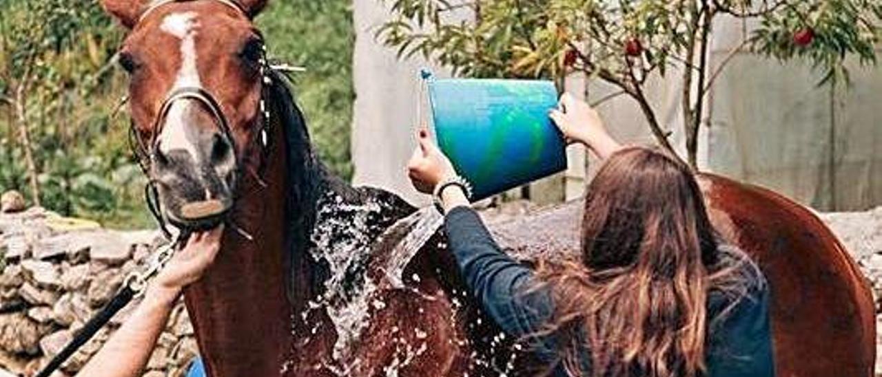 Un caballo recibiendo agua durante el Raid Hípico de Ribadedeva.