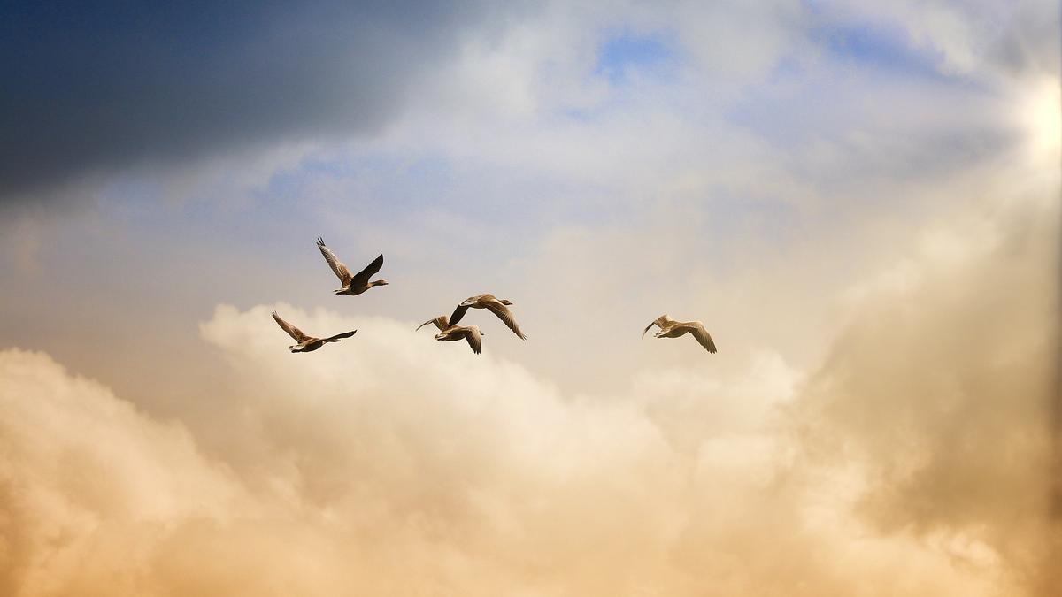 La libertad, una entelequia