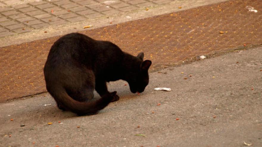 El colectivo Gatuchinhos solicita ayuda para mantener a los gatos a los que protege