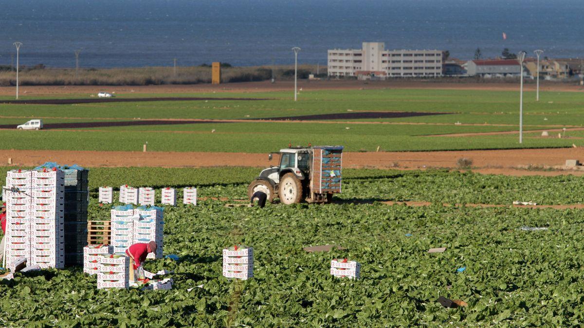 El regadío no podrá usar fertilizantes nitrogenados en la zona más cercana al Mar Menor.