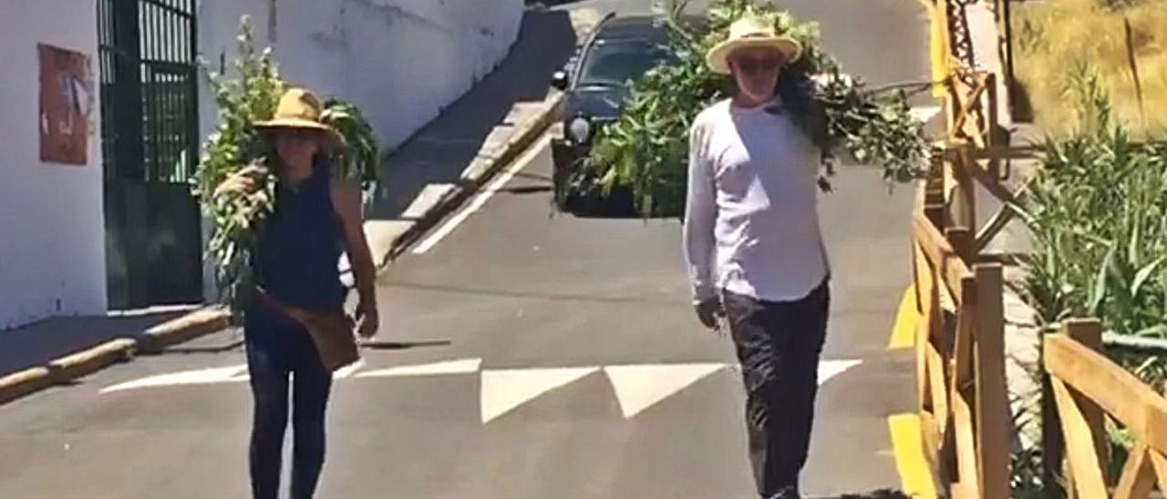 Unos vecinos de El Valle de Agaete ayer, cargando a hombros con un puñado de ramas. | | LP/DLP