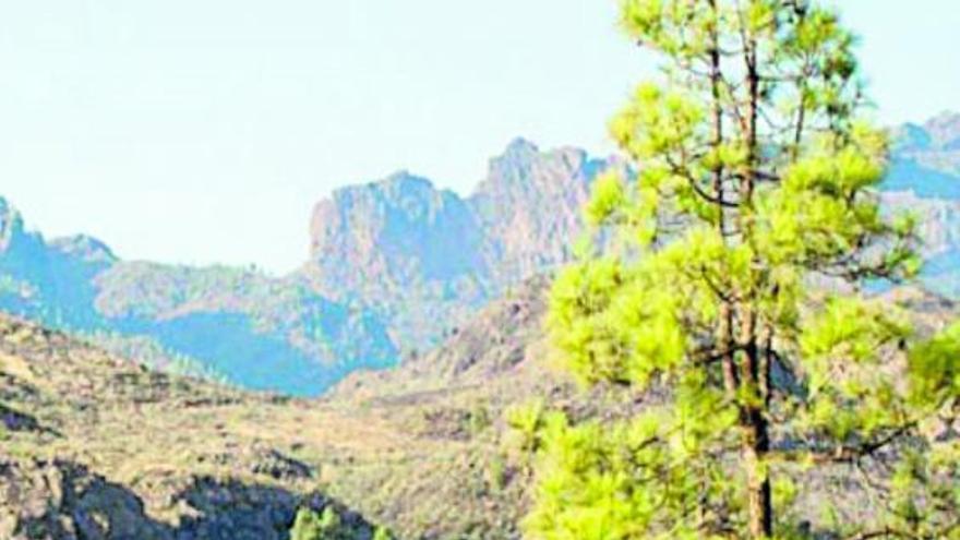 Canarias mira al futuro en verde