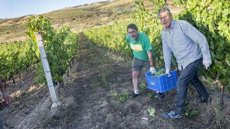 Monterrei espera una nueva cosecha récord, con más de 5,5 millones de kilos