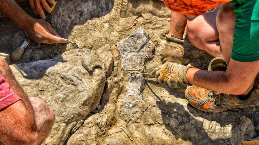 Hallados en La Rioja restos óseos de tres dinosaurios distintos