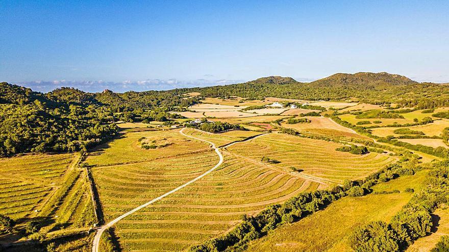 Una empresa planta a Girona aromàtiques per a agricultura regenerativa