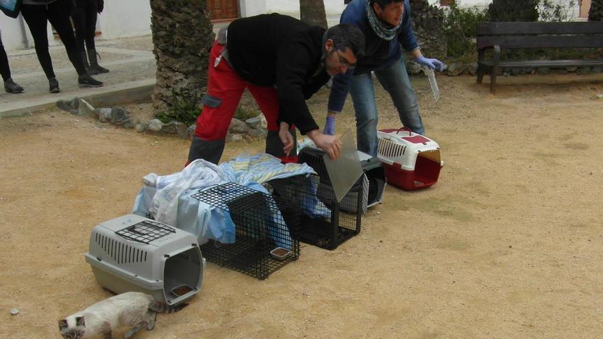 Protección Animal graba con un dron en Tabarca la suelta de gatos tras ser esterilizados