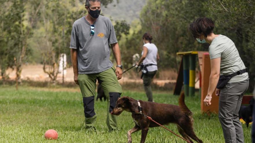 Escuela de verano para perros en Ibiza