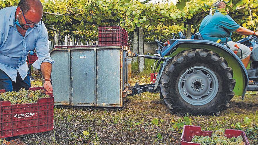 La vendimia en la Denominación Rías Baixas entra en su recta final con más de 41 millones de kilos
