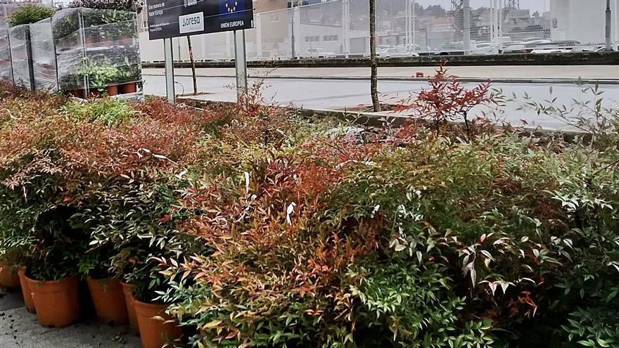 Nuevas plantas para el paseo de la Avenida de Ourense