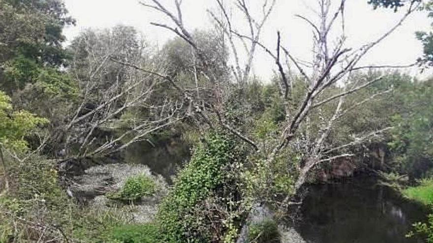 Acometen trabajos de conservación en los ríos Avia, Limia, Bibei y Xares