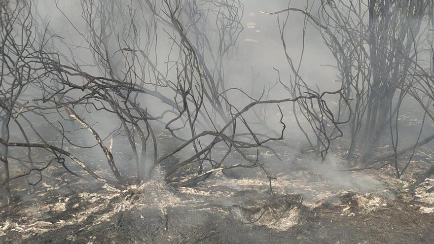Controlado un incendio forestal en Losacio