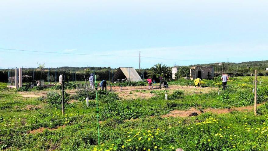 Huertos sociales, espacios de transformación y comunidad