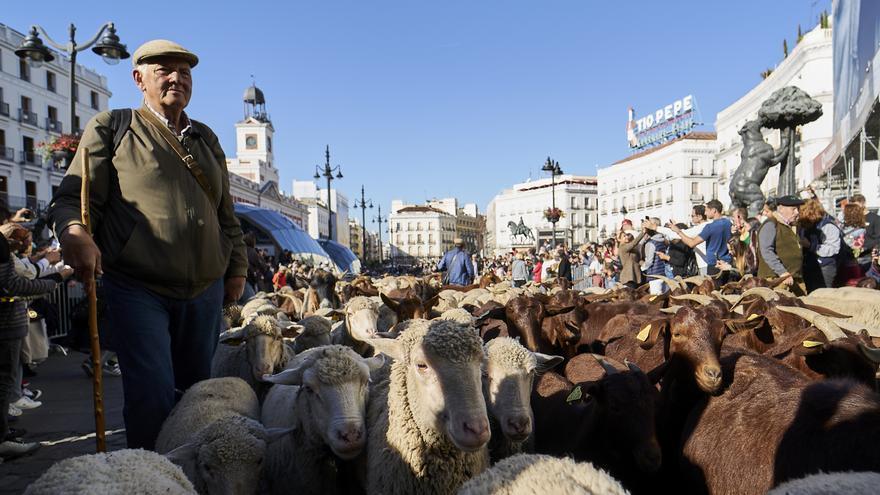 Ovejas y cabras conquistan Madrid en la 28ª Fiesta de la Trashumancia
