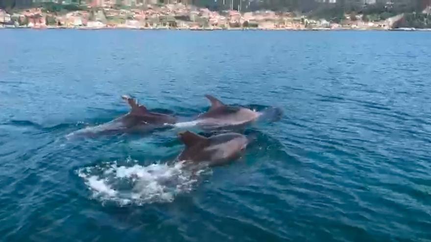 Una despedida de solteros en la ría de Vigo... entre delfines