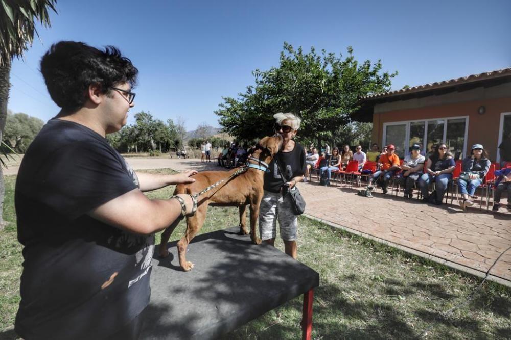 Diese Hunde suchen ein neues Zuhause