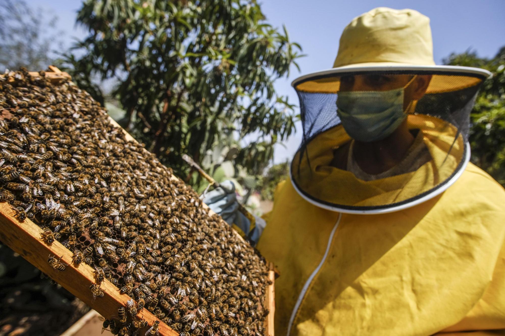 Colmenar en Moya del apicultor Iván Santana
