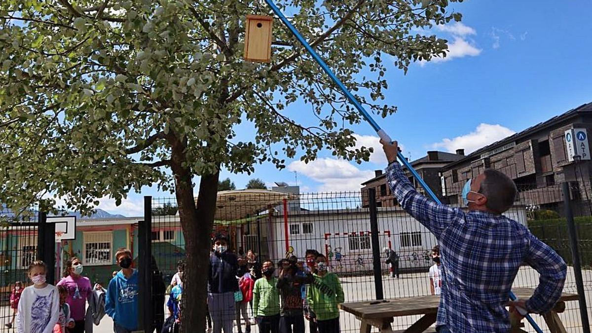 Un tècnic penja una caseta niu per a mallerengues feta en un dels tallers escolars   AJ PUIGCERDÀ