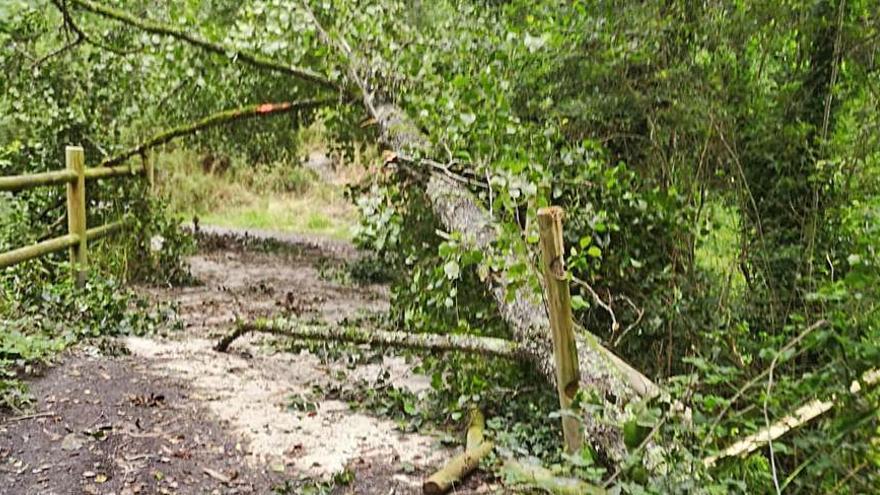 Silleda retira un árbol del puente entre Pazos y Martixe