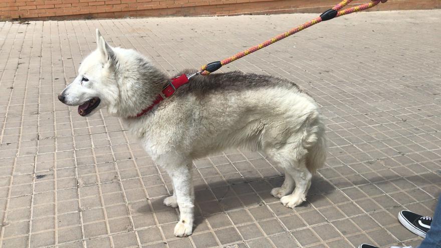 Alzira se personará como acusación en el caso del perro maltratado
