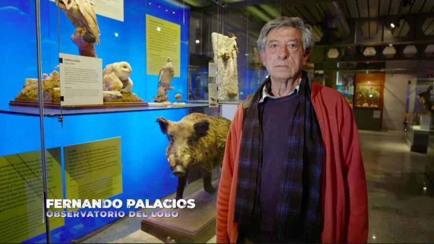 """Frank de la Jungla, sobre los lobos: """"Podemos salvarlos o erradicarlos"""""""