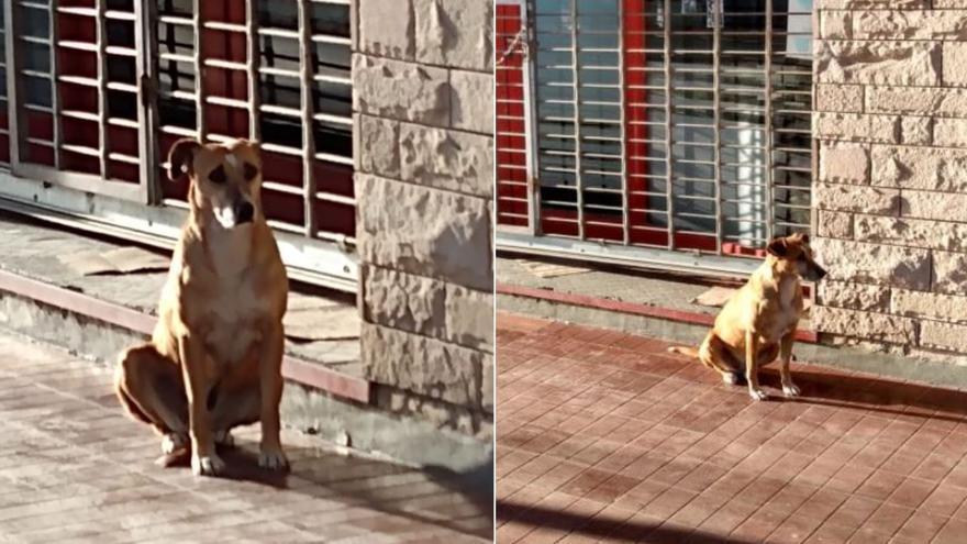 Bianca, la perra que lleva días esperando a su dueña fallecida a las puertas de su librería
