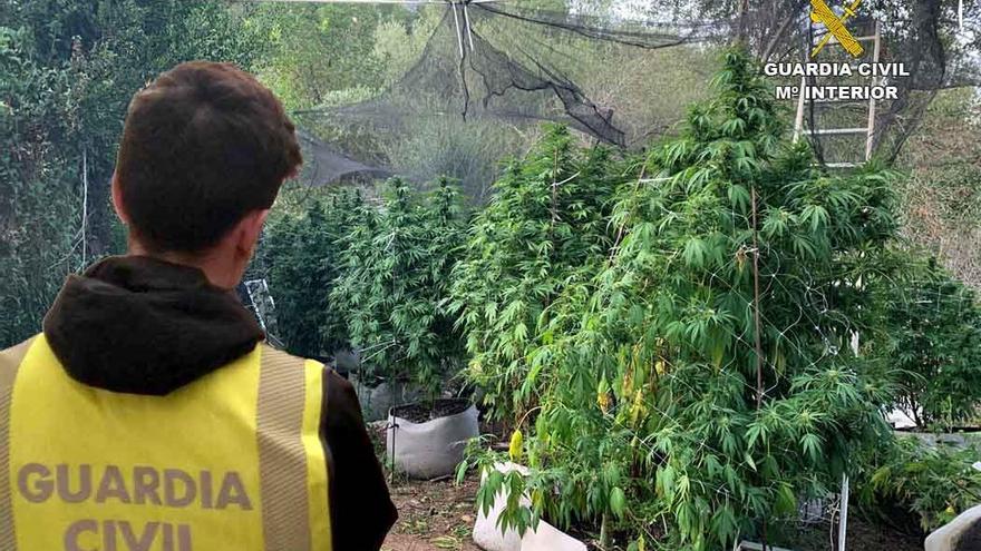Guardia Civil detiene a tres personas por venta, cultivo y elaboración de droga en Esporles