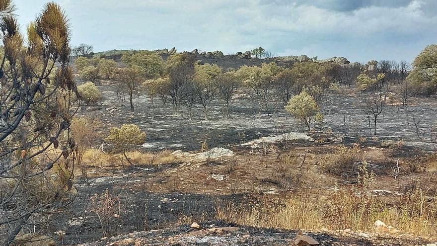 El Gobierno declara zona afectada por emergencias de protección civil Castilla y León por los últimos incendios