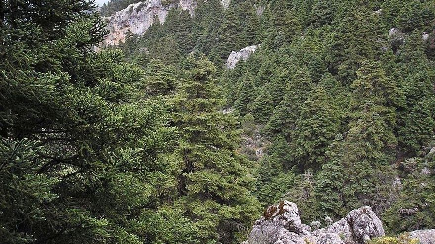 El Gobierno central da un paso decisivo para el Parque Nacional Sierra de las Nieves