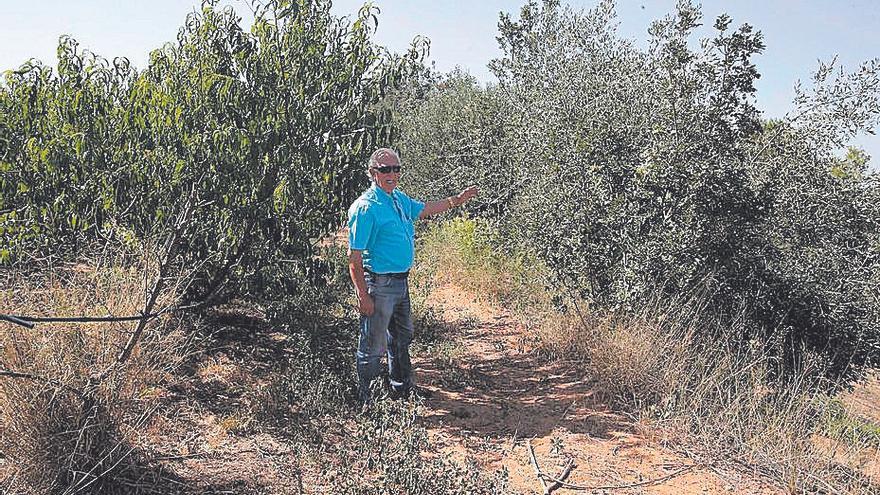 El cultivo ecológico se triplica en seis años