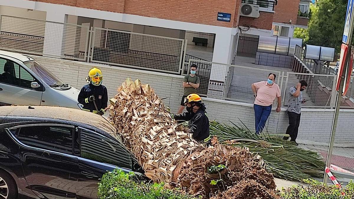 Bomberos retirando la palmera caída en Nueva Málaga.