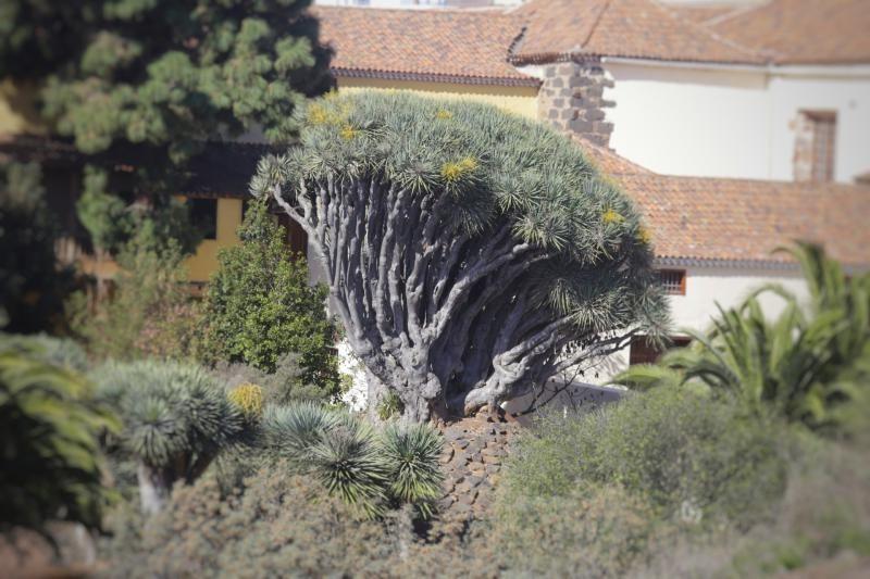 Tala de árboles en La Laguna