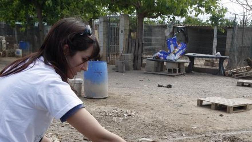 El albergue animal de l'Alcúdia podrá acoger 200 perros y dispondrá hasta                   de quirófano
