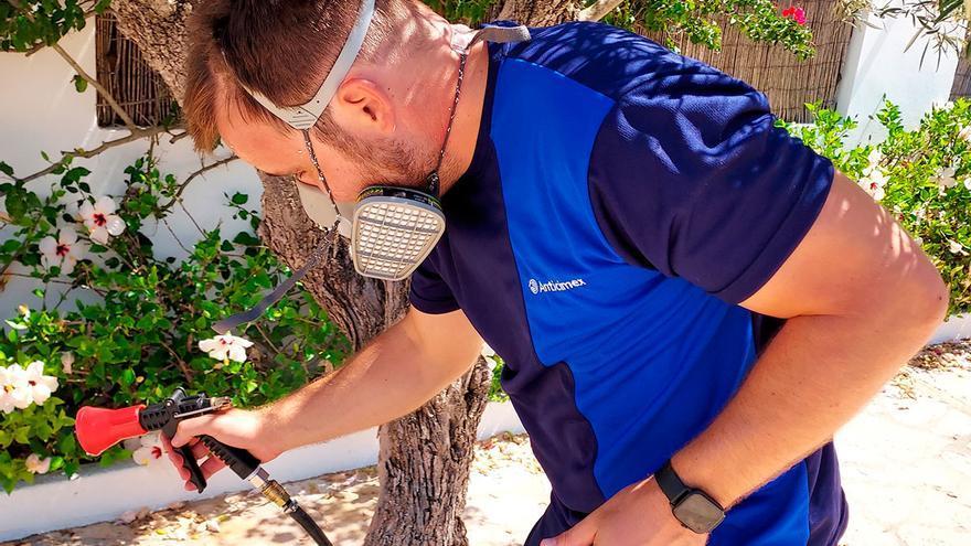 Consejos para evitar la aparición del mosquito tigre este verano en Baleares
