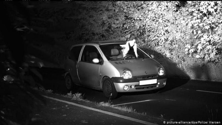 Un pájaro salva a un conductor alemán de ser multado por exceso de velocidad