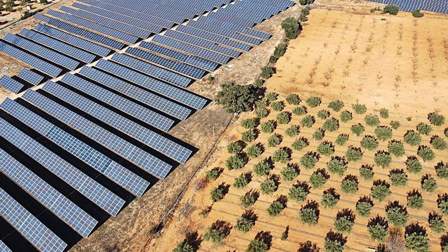 El Ayuntamiento de Villena rechaza acoger las 17 plantas solares
