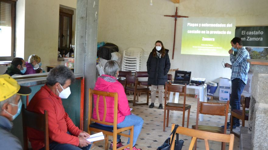 Cobreros se suma a los municipios en la lucha contra la avispilla del castaño