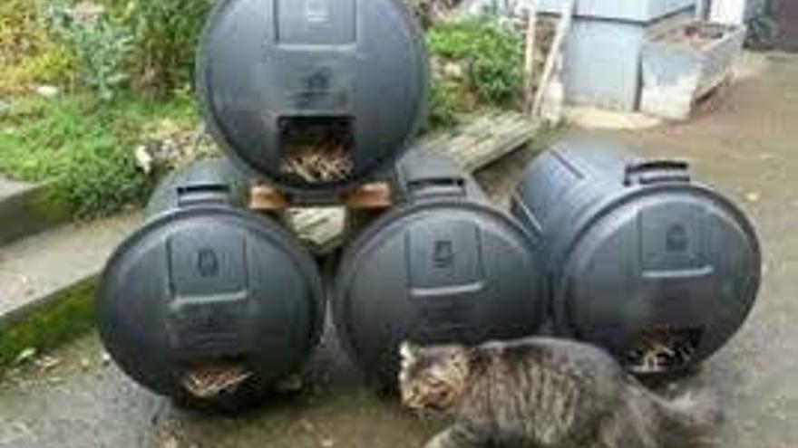 EUPV Quart pide reutilizar los contendores como refugios felinos