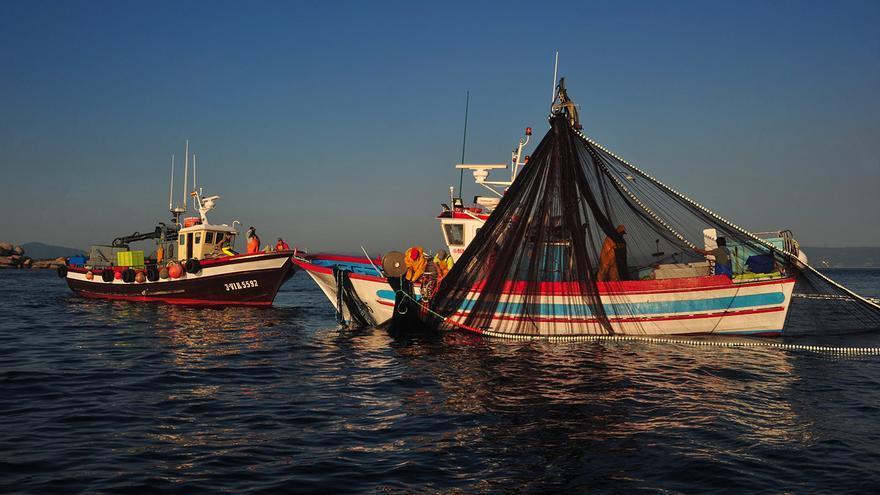 """El jurel """"esquiva"""" la costa de Galicia: las descargas caen al nivel histórico más bajo"""
