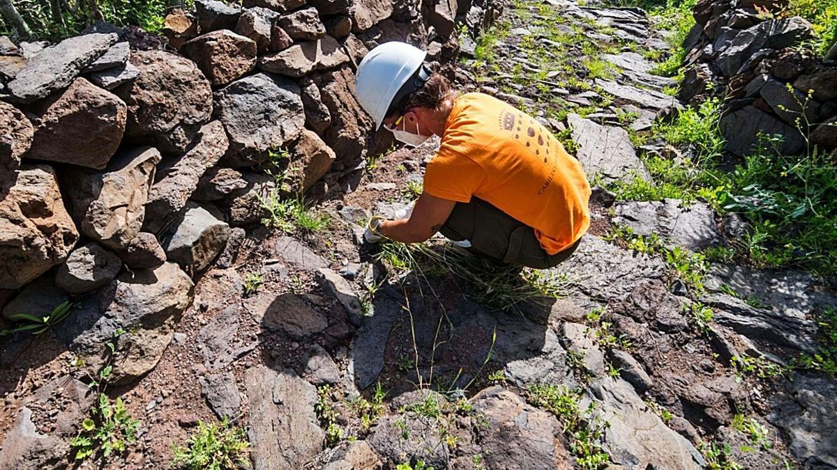 Mejora de uno de los senderos en La Gomera.