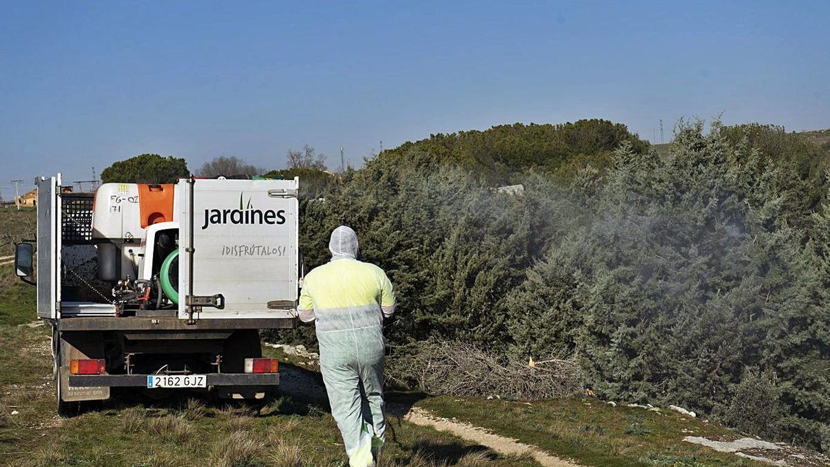 Un empleado del servicio de jardines trabaja en el bosque de Valorio.