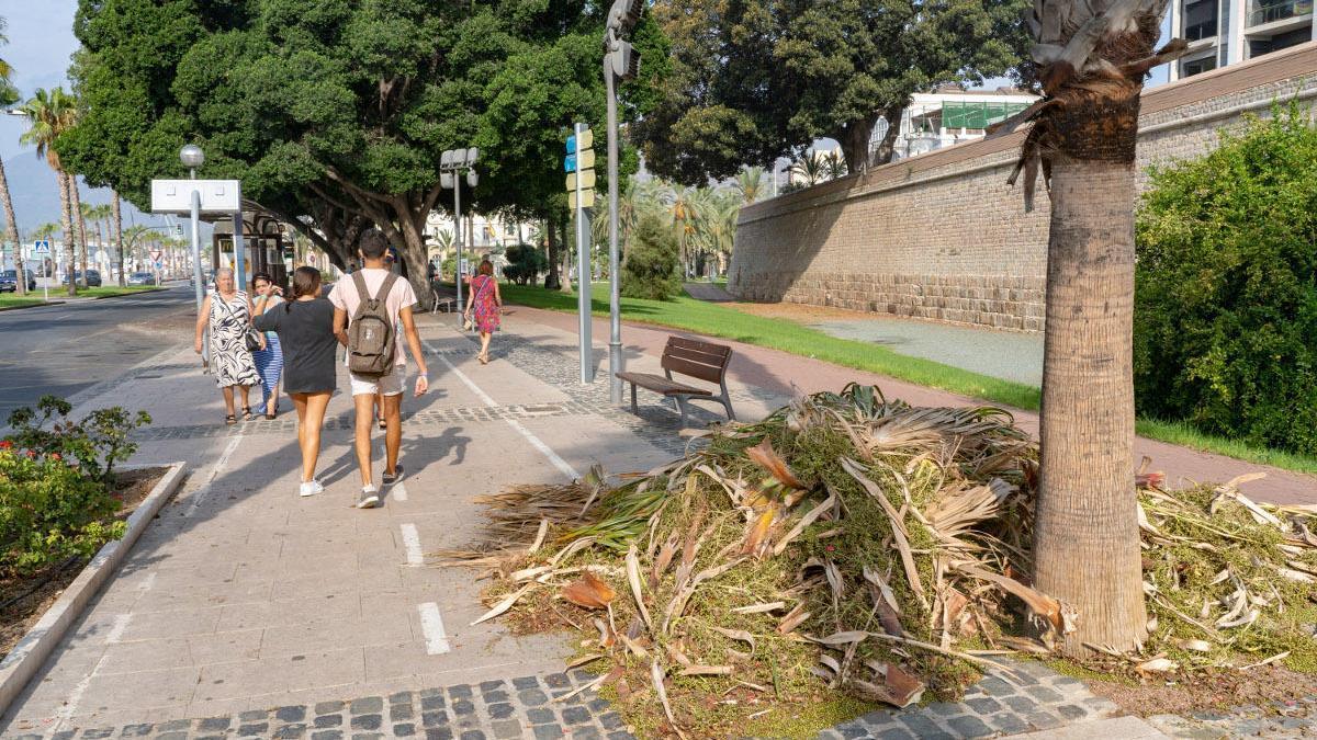 El Ayuntamiento reforzará la recogida de restos vegetales